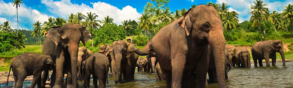 sri-lanka-tours